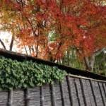 京都・鈴虫寺の紅葉(*´ω`)