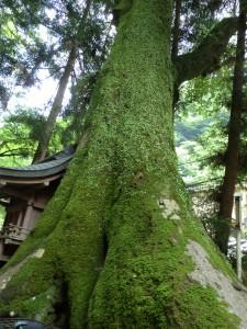 京都 神社 貴船