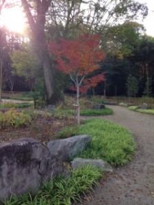 京都 嵐山 紅葉 鈴虫寺 (10)