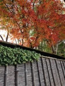 京都 嵐山 紅葉 鈴虫寺