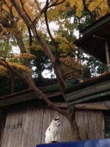 京都 嵐山 紅葉 鈴虫寺)
